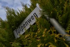 Tulpenweg_2